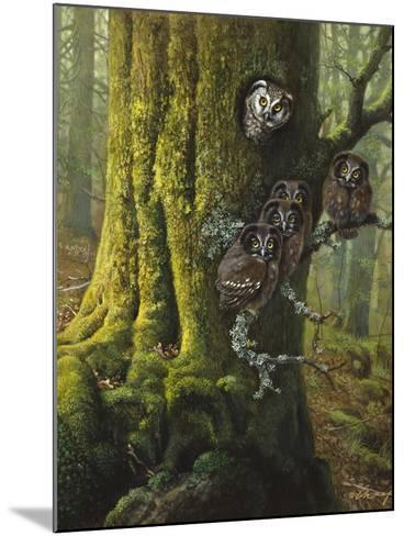 Tengmalms Owls-Harro Maass-Mounted Giclee Print