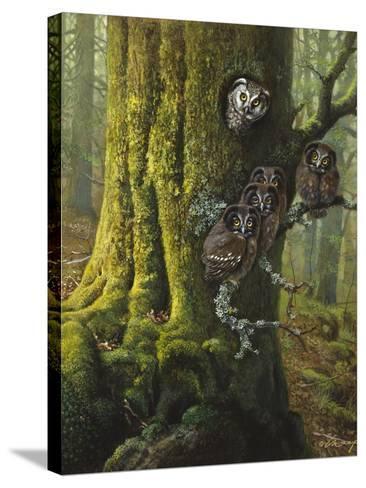 Tengmalms Owls-Harro Maass-Stretched Canvas Print
