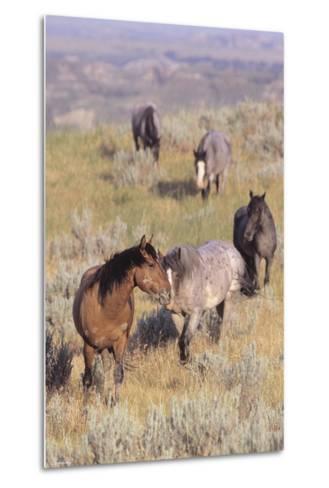 Wild Horses 13-Gordon Semmens-Metal Print