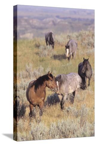 Wild Horses 13-Gordon Semmens-Stretched Canvas Print