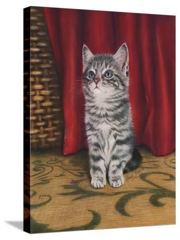 Grey Kitten and Red Curtain-Janet Pidoux-Stretched Canvas Print