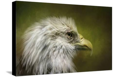 Bald Eagle in the Grove-Jai Johnson-Stretched Canvas Print