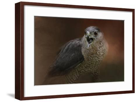 Angry Sharp Shinned Hawk-Jai Johnson-Framed Art Print