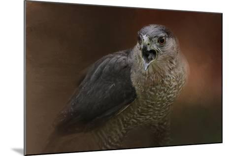 Angry Sharp Shinned Hawk-Jai Johnson-Mounted Giclee Print