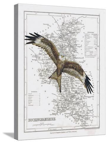 Red Kite-Jane Wilson-Stretched Canvas Print