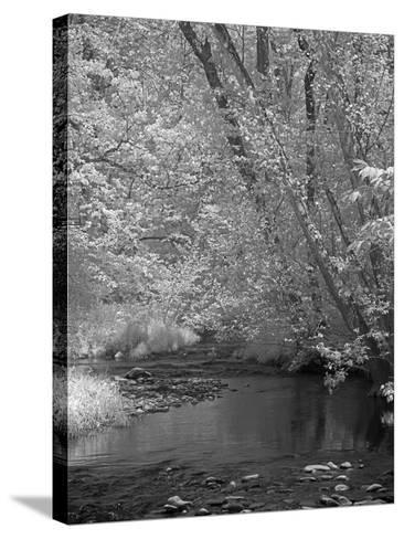 Forrest-J.D. Mcfarlan-Stretched Canvas Print
