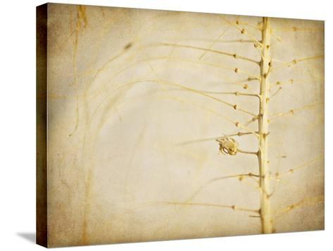 Desert Afterlife 2A-Jessica Rogers-Stretched Canvas Print