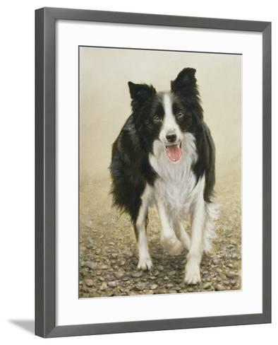 Border Collie-John Silver-Framed Art Print