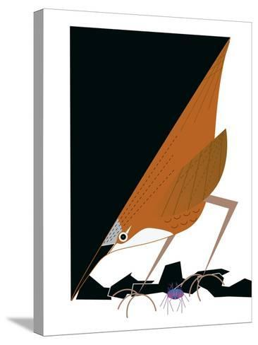 Canyon Wren-Marie Sansone-Stretched Canvas Print
