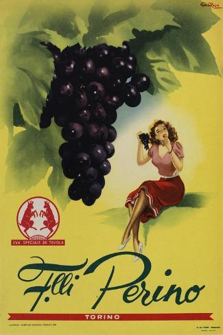 Perino - Grapes-Marcus Jules-Stretched Canvas Print