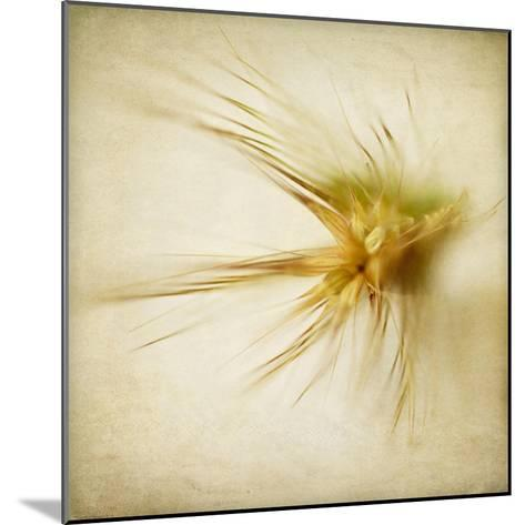 Grasses 2-Jessica Rogers-Mounted Giclee Print