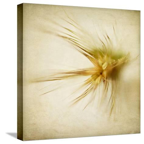 Grasses 2-Jessica Rogers-Stretched Canvas Print