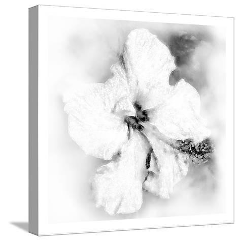 Hibiscus-Maria Trad-Stretched Canvas Print