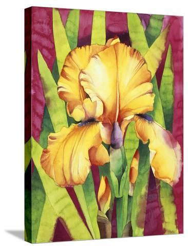 Yellow Iris with Maroon Back-Mary Russel-Stretched Canvas Print