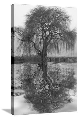 Sauce en Agua 1-Moises Levy-Stretched Canvas Print