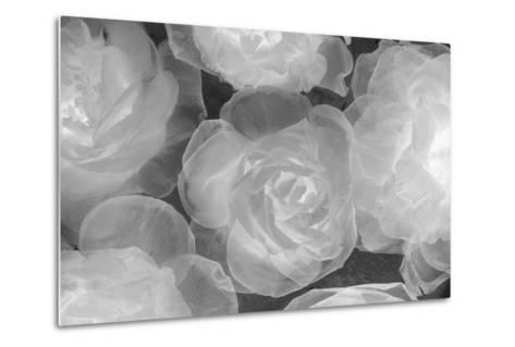 Rosas Blancas-Moises Levy-Metal Print