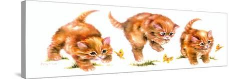 Kitten and Butterfly-Peggy Harris-Stretched Canvas Print