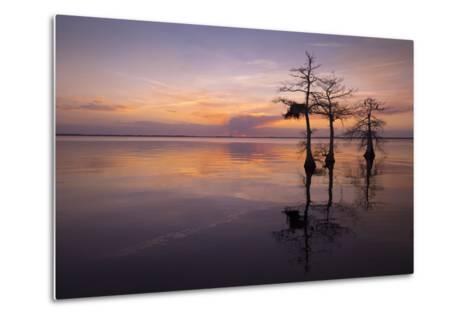 Three Trees on Sunset-Moises Levy-Metal Print