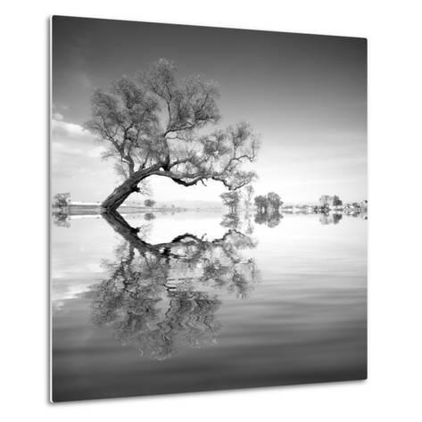 Arbol en Agua 3 BN-Moises Levy-Metal Print