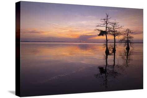 Three Trees on Sunset-Moises Levy-Stretched Canvas Print