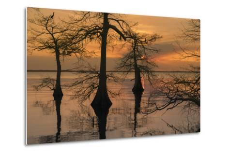 Three Trees on Water-Moises Levy-Metal Print