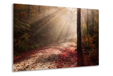 Light in the Forest-Michael Blanchette-Metal Print