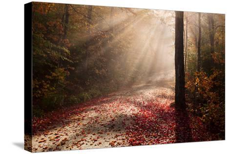 Light in the Forest-Michael Blanchette-Stretched Canvas Print