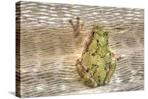 Tree Frog-Robert Goldwitz-Stretched Canvas Print