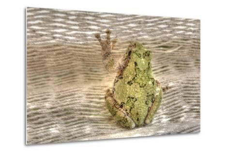 Tree Frog-Robert Goldwitz-Metal Print