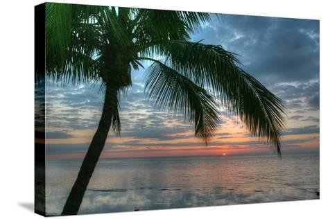 Key West Sunrise One Palm-Robert Goldwitz-Stretched Canvas Print