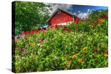 Red Barn and Flowers-Robert Goldwitz-Stretched Canvas Print