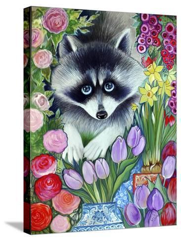 Raccoon-Oxana Zaika-Stretched Canvas Print