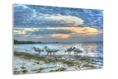 Ibis at Sunrise-Robert Goldwitz-Metal Print