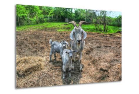 Goats-Robert Goldwitz-Metal Print