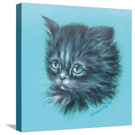 Black Kitten - 23A-Peggy Harris-Stretched Canvas Print