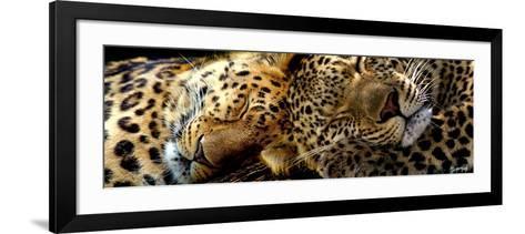 Two Sleepers Cheetahs-Murray Henderson-Framed Art Print