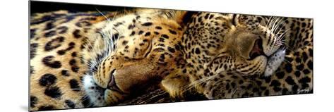 Two Sleepers Cheetahs-Murray Henderson-Mounted Giclee Print