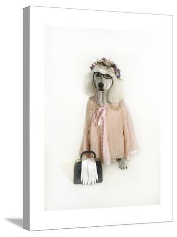 Poodle Dressed as Older Woman-Nora Hernandez-Stretched Canvas Print