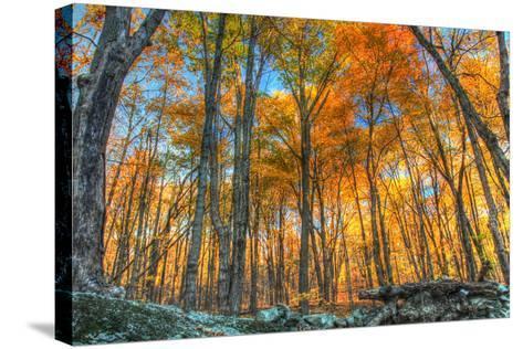 Winding Hills Park-Robert Goldwitz-Stretched Canvas Print
