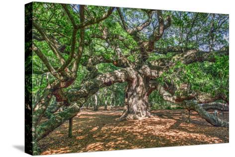 Angel Oak-Robert Goldwitz-Stretched Canvas Print