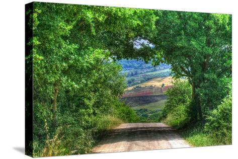 Tuscan Tree Tunnel-Robert Goldwitz-Stretched Canvas Print