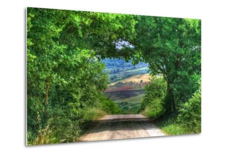 Tuscan Tree Tunnel-Robert Goldwitz-Metal Print