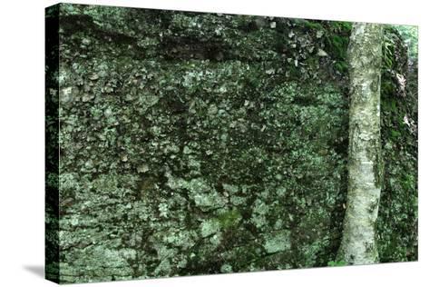 Tree Trunk Rock Wall-Robert Goldwitz-Stretched Canvas Print