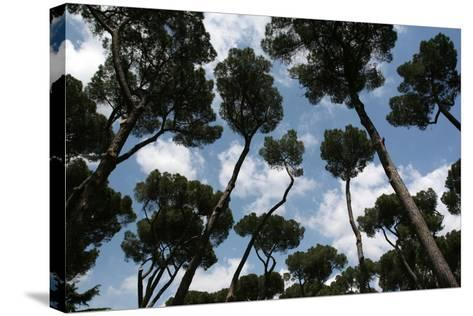 Tuscan Trees Clouds-Robert Goldwitz-Stretched Canvas Print