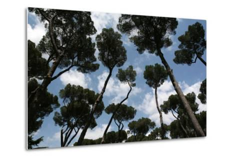 Tuscan Trees Clouds-Robert Goldwitz-Metal Print