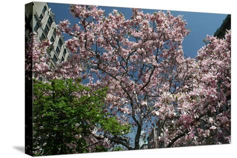 Urban Spring-Robert Goldwitz-Stretched Canvas Print