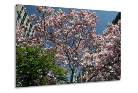 Urban Spring-Robert Goldwitz-Metal Print