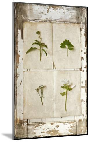 Botanical Board 1-Symposium Design-Mounted Giclee Print