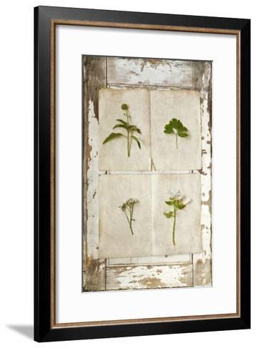 Botanical Board 1-Symposium Design-Framed Art Print