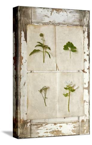 Botanical Board 1-Symposium Design-Stretched Canvas Print